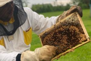 Projekt - Včely